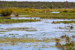 Francja: Więcej pieniędzy na różnorodność biologiczną