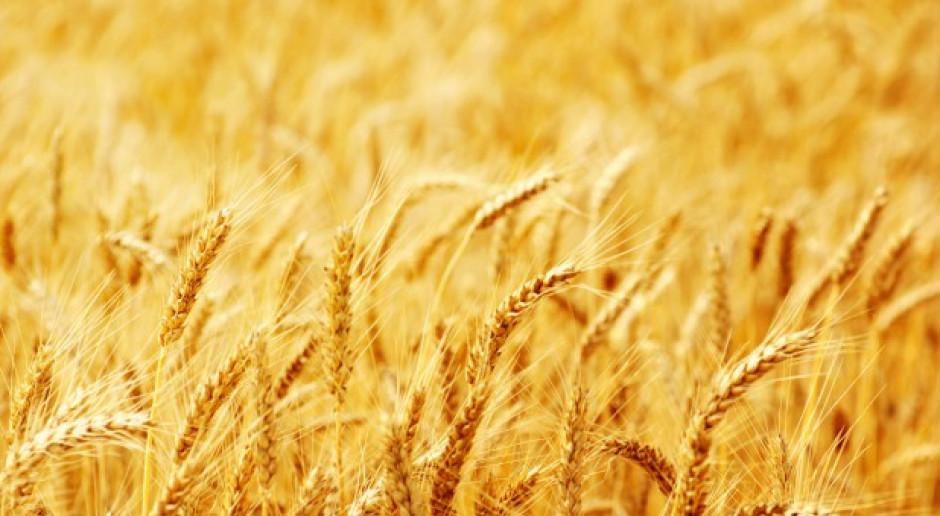 Rosja: Do 9 lipca zebrano 19,8 mln ton zbóż