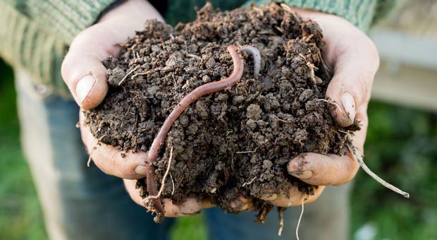 Żywa gleba