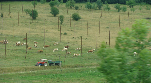 Sąsiedzi już po żniwach? Rolnictwo na Węgrzech i w Rumunii [Galeria]
