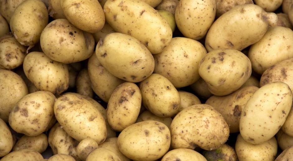 Z powodu suszy mają wzrosnąć ceny ziemniaka