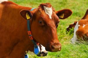 Komisja sejmowa: będą ułatwienia w rejestracji zwierząt gospodarskich