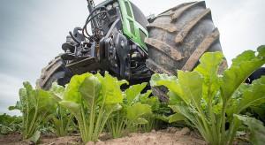 Zbiory buraka i ziemniaka także zagrożone