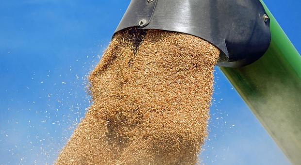 Czesi oczekują mniejszych zbiorów zbóż