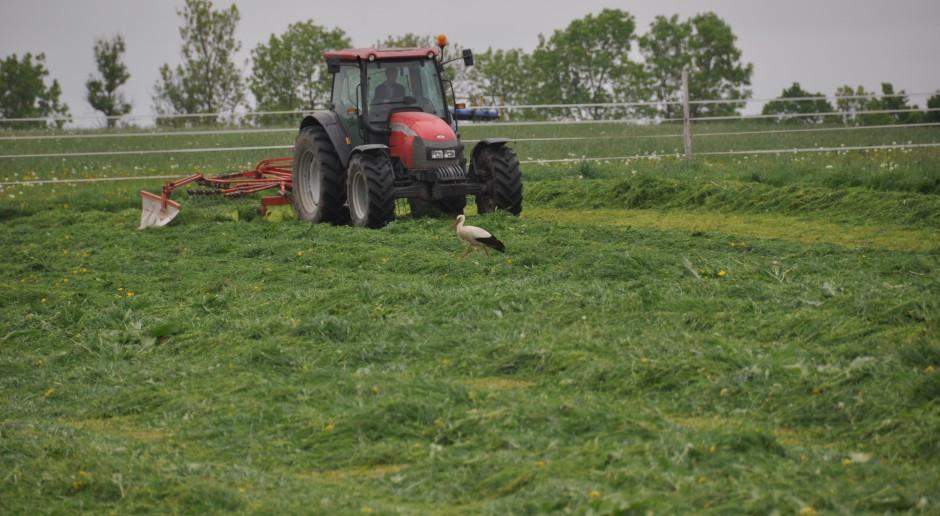 KE: Zgoda na mniejsze wymogi dotyczące upraw i obszarów proekologicznych