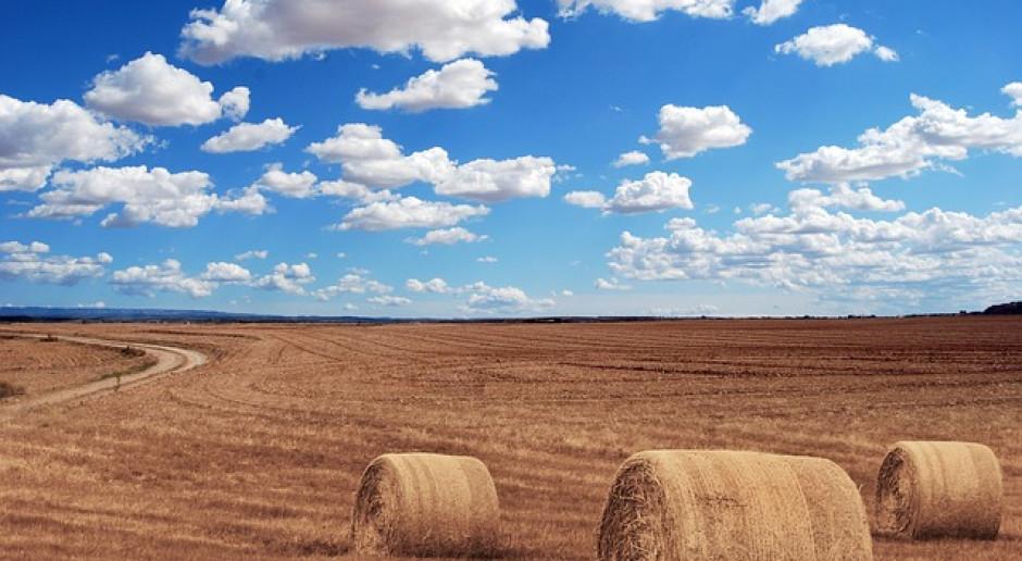 Rosja: Do 16 lipca zebrano 29,5 miliona ton zboża
