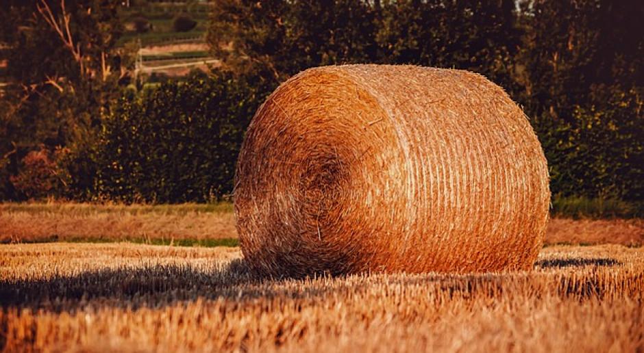 Niemcy: Ogromne straty w plonach roślin zbożowych