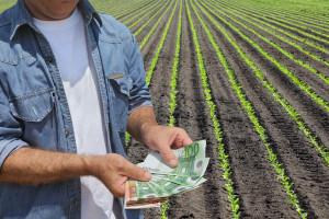 ARiMR liczy wpływające wnioski i dokonane wypłaty