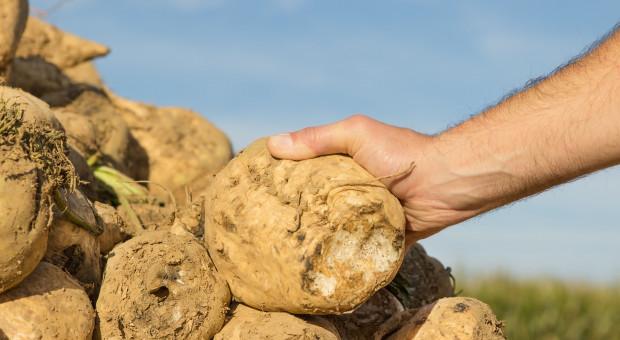 Holding spożywczy z KSC, ale bez plantatorów buraka cukrowego?