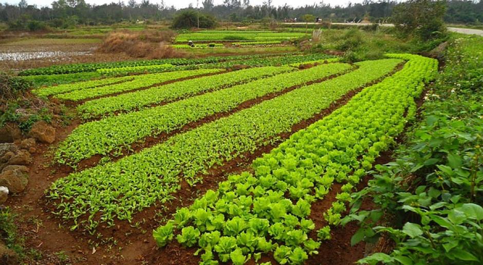 WTO: Chiny zmieniają politykę rolną