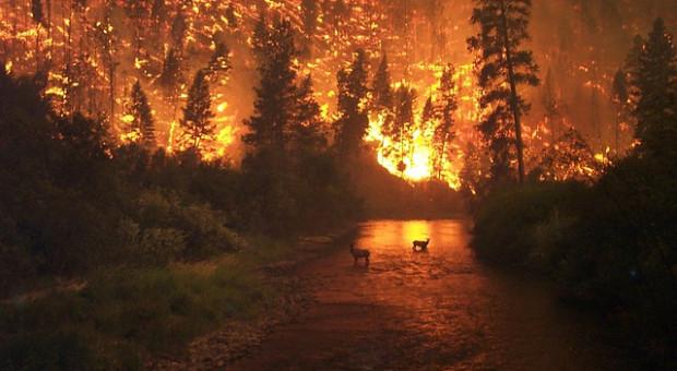 Jak ochronić zabudowania przed żywiołem ognia?