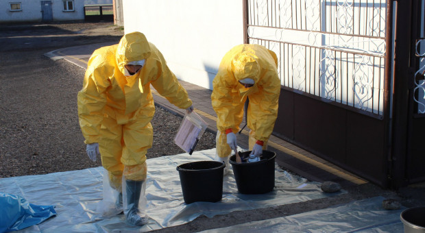 Jak wirus ASF wniknął do stad trzody?