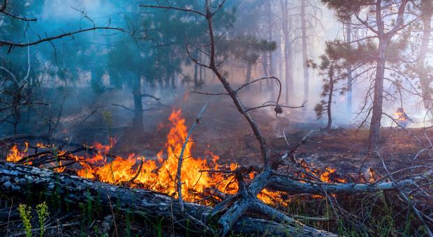 Lasy Państwowe: Obecnie dwa razy więcej pożarów lasów niż w poprzednich latach