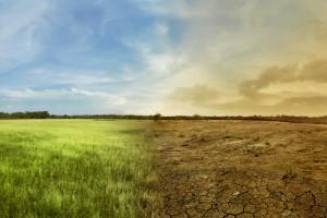 Banki o tegorocznych trudnych zbiorach zbóż - część I
