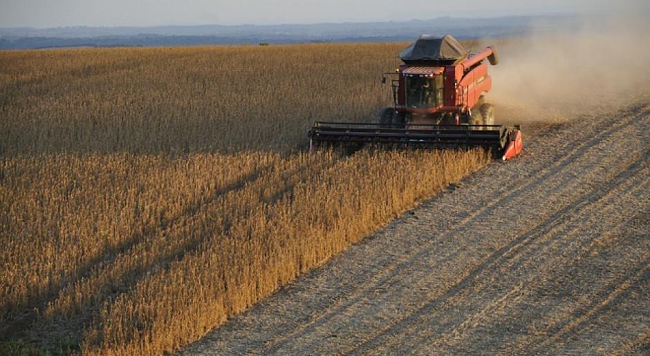 IGC: Prognoza światowej produkcji soi w lipcu lekko wrosła