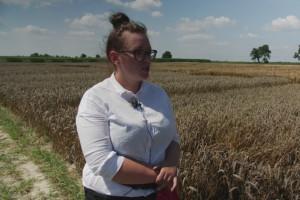 Stan pszenicy ozimej na polach IHAR w Radzikowie