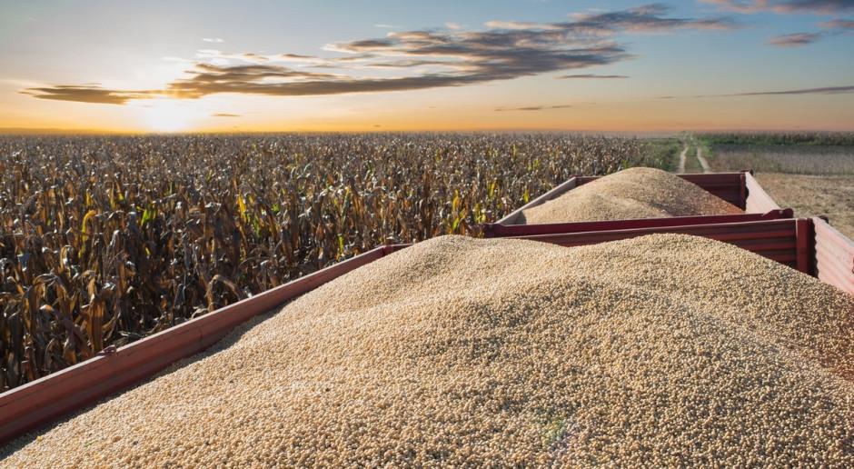 Ukraina: Zebrano 21,2 mln ton zbóż i bobowatych