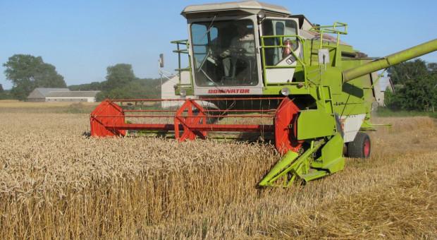GUS: Zbiory zbóż niższe o 14 proc., rzepaku o 16 proc.