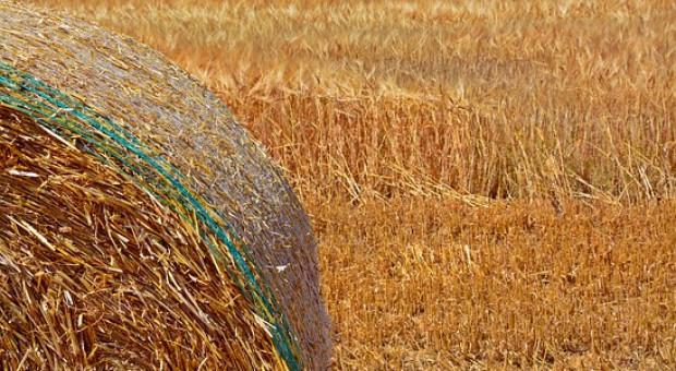 KE: Zbiory zbóż w UE mniejsze niż w  2018 r.