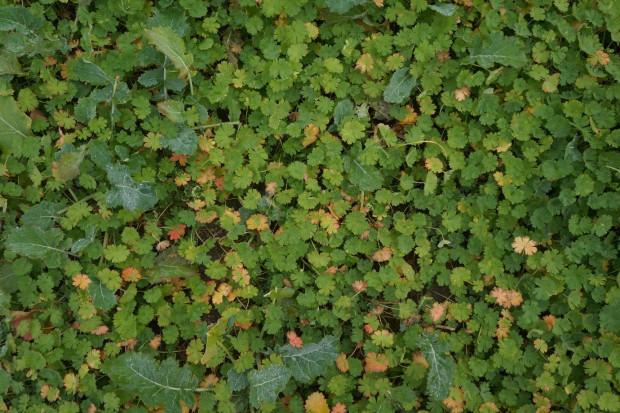 Jesienna ochrona herbicydowa