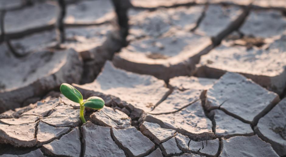 Gminy zwlekają z szacowaniem strat spowodowanych suszą