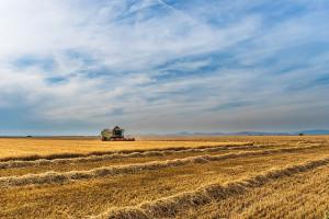Ukraina: Zebrano 28,6 mln ton ziarna zbóż i bobowatych