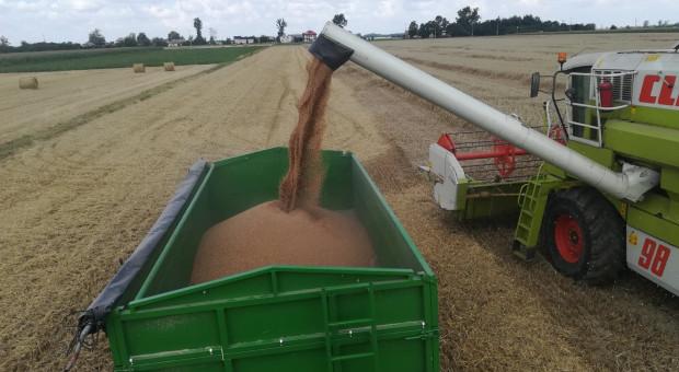 KFPZ: Żniwa blisko finiszu, zbiory zbóż ok. 21 mln t, cena wzrasta