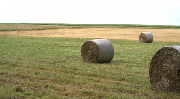 Niemcy: Raiffeisenverband - najmniejsze zbiory zbóż od 1994 roku