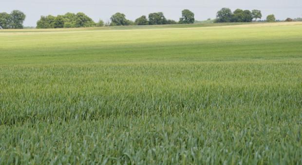 Nowość wśród fungicydów – nowa substancja czynna Inatreq Active