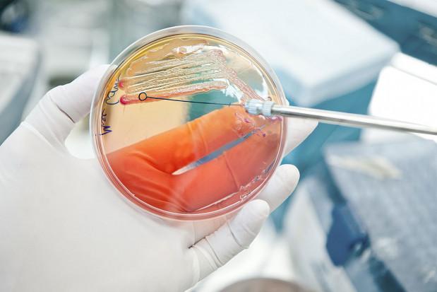 Antybiotyki w produkcji zwierzęcej: Potrzeba odpowiedzialności