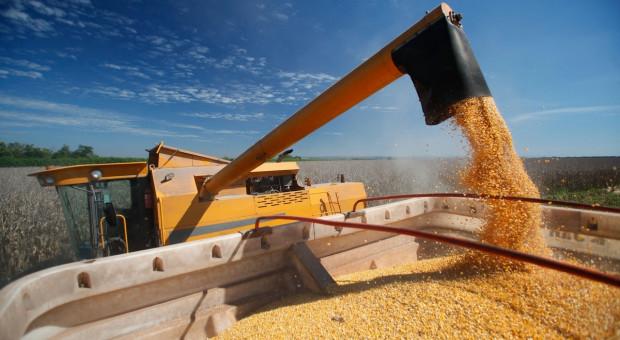 Korekta spadkowa notowań zbóż przed raportem USDA