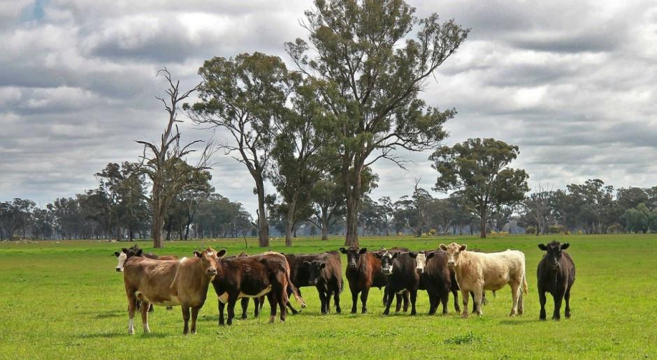 Australijska susza gwałtownie podniosła ceny siana