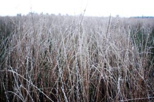 Polska Grupa Nasienna – trawy przetrwały lepiej niż zboża