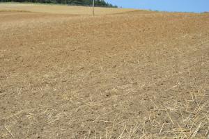 Dawka fosforu i potasu pod pszenicę ozimą