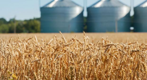 Ceny zbóż idą w górę, mała podaż ziarna