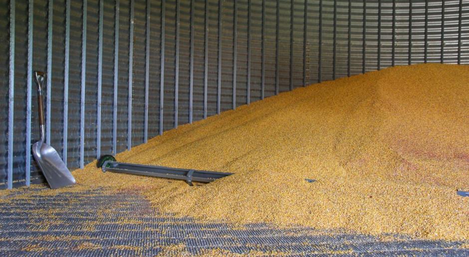 Zróżnicowane plony zbóż, zobacz jakie w poszczególnych regionach