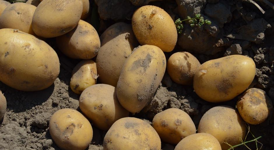 Obrót ziemniakami tylko z oznakowaniem