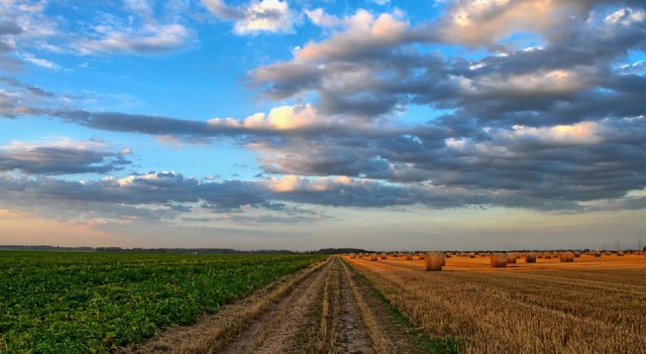 Ukraina: Zebrano 34 mln ton zbóż i bobowatych