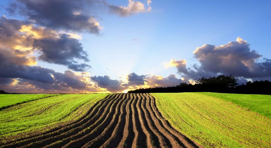 Ukraina: Grunty rolne: w 64 proc. w rękach prywatnych