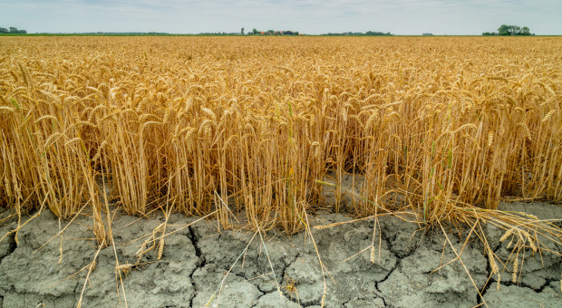 Umowa sprzedaży zobowiązuje rolnika, a czy wystąpienie klęski zobowiązuje rząd do jej potwierdzenia?