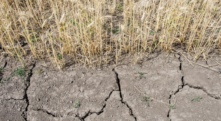 Szkody spowodowane suszą w Niemczech osiągnęły prawie 3 mld euro