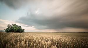 Prognoza plonów a ceny surowców rolnych