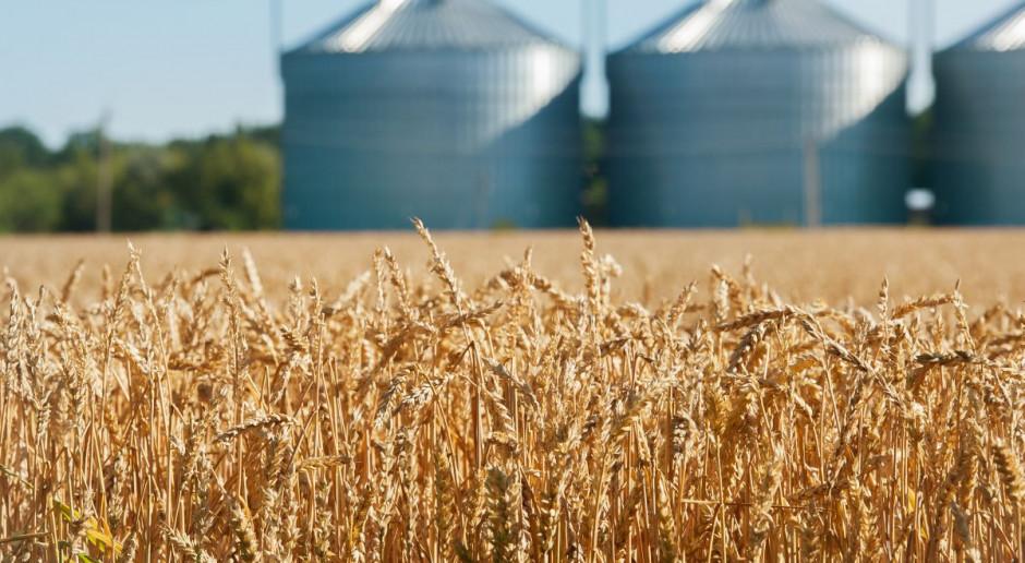 Cena zbóż nadal rośnie, spada rzepaku
