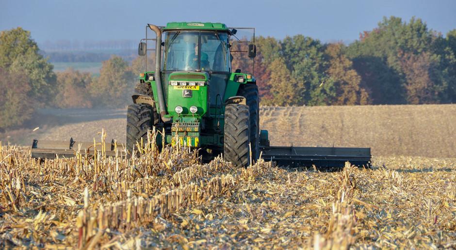 Wartość stanowiska po kukurydzy