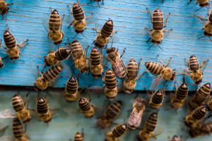 Jarosław: Niepełnosprawni robią domki dla dziko żyjących pszczół