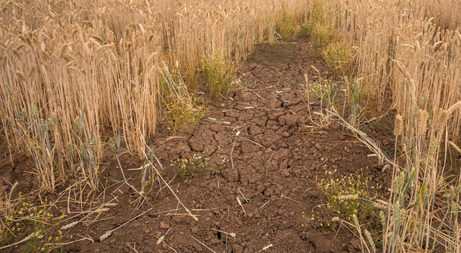 PGN: Należy rozszerzyć zakres upraw objętych monitoringiem suszy