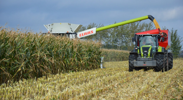 Razem dla rekordu Polski - zbiór kukurydzy na kiszonkę