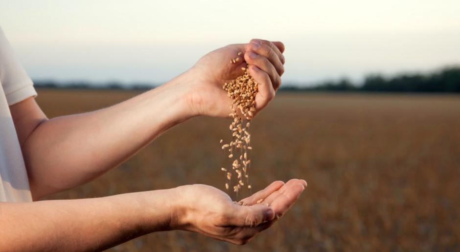 Które odmiany pszenicy ozimej plonowały w 2018 r. najwyżej?