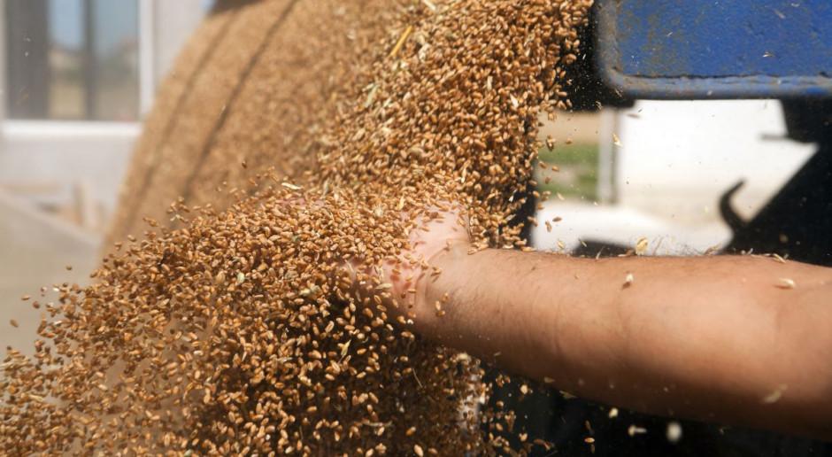 W skupach obniżka cen pszenicy