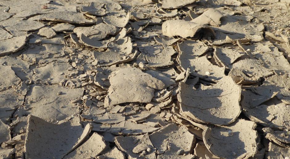 IUNG: W zachodniej Polsce zwiększa się obszar objęty suszą